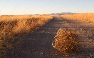 Трактор т 25 в контакте